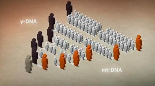 YDNAmtDNA